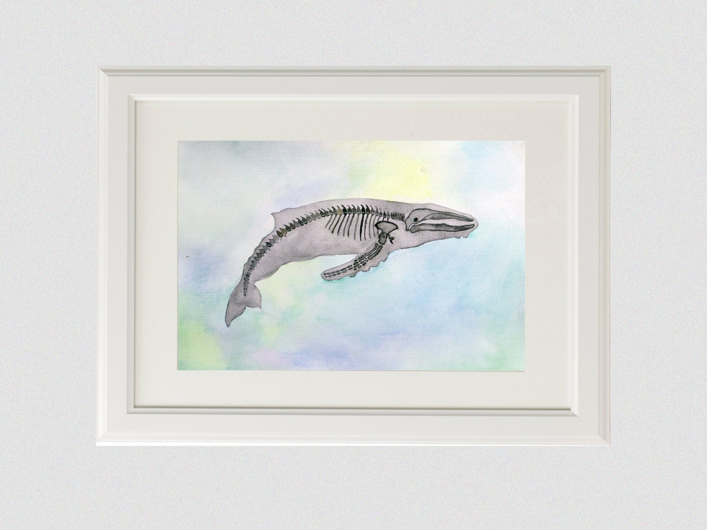 Original Whale Anatomy Watercolor Painting Animal Skeleton Etsy