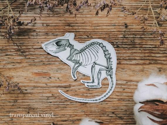 Ratte Skelett Aufkleber Maus Anatomie Anatomie Mäuse | Etsy