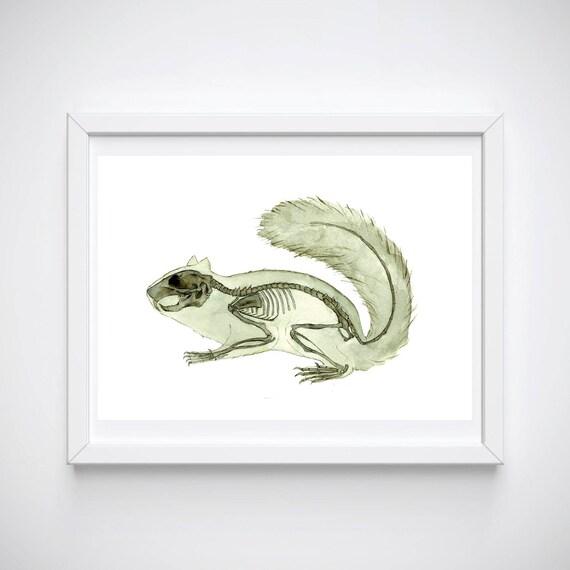 Eichhörnchen Skelett Druck Wand Kunst Natur Wald Anatomie | Etsy