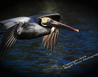 Pelican #6192