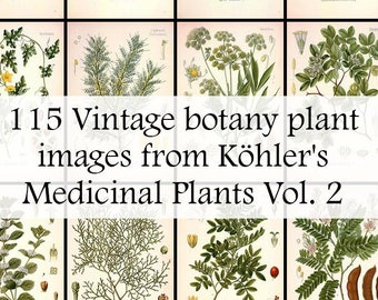 The ultimate collection of 115 Plant illustrations in Köhler's Medicinal Plants volume 2 - High Res Printable Download - Vintage Botanical