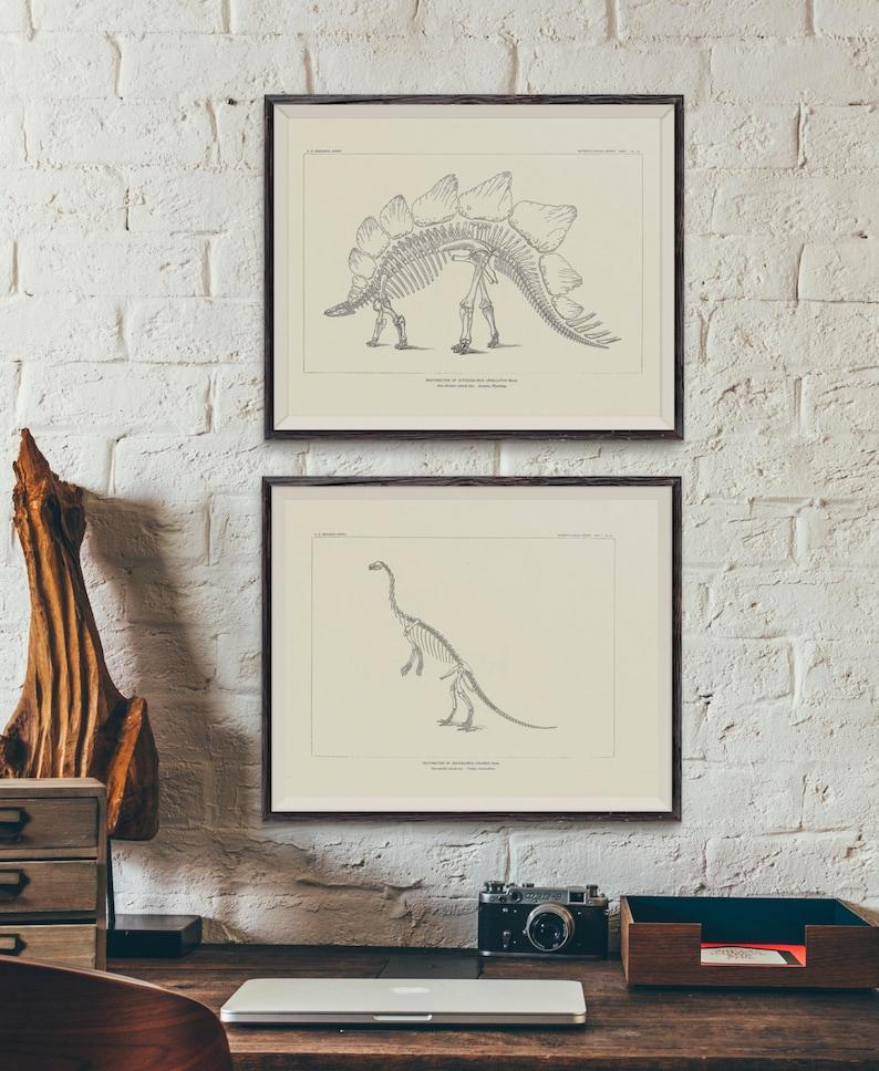 12 vintage drawings of dinosaur fossil skeletons from North America -  paleontology - dinosaur bones - dinosaur plates