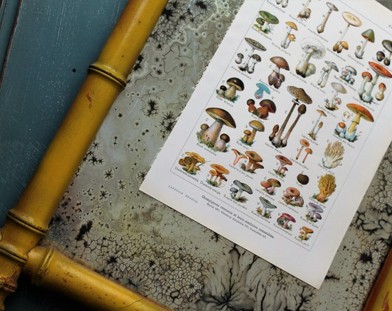 Illustration mushrooms from an old Larousse Médical from 1924 / 18 x 26 cm / old French poster