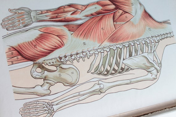 Illustrations on the organs of the human body, cabinet of curiosities, medicine, ancient illustration,