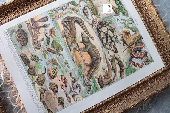 Illustration authentique Les fonds marins, illustration ancienne Les reptiles, Affiche Millot de 1924, décor mural,ILL191787