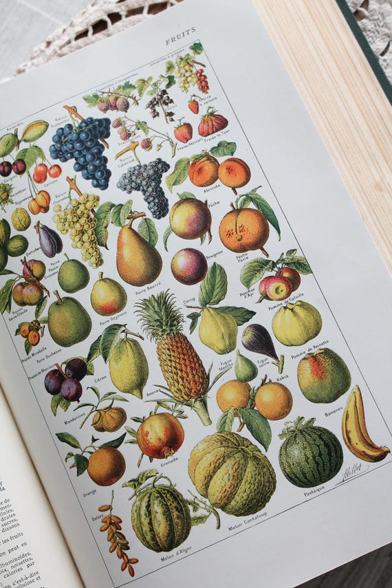 Illustration of 1930 on fruits, old dictionary, old illustration, household Larousse 1926, old, 26x18.5cm