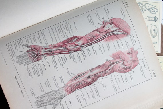 Ancient anatomy illustration, illustration on nerves, Page de Larousse French medical former of 1924, illustration 18 x 26 cm