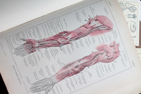Ancient anatomy illustration, illustration on nerves, Page de Larousse French medical former of 1924, illustration 18 x 26 cm
