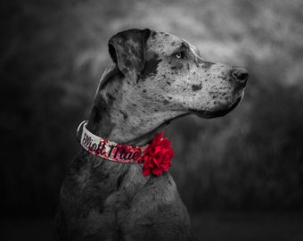 Embroidered Dog Collar with Red Removable Collar Flower