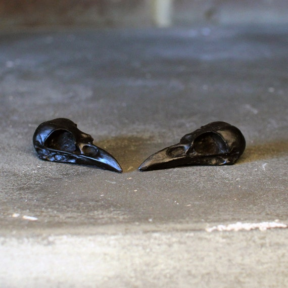 oddity curiosity Finch skull in bronze resin cast deep shaddow box