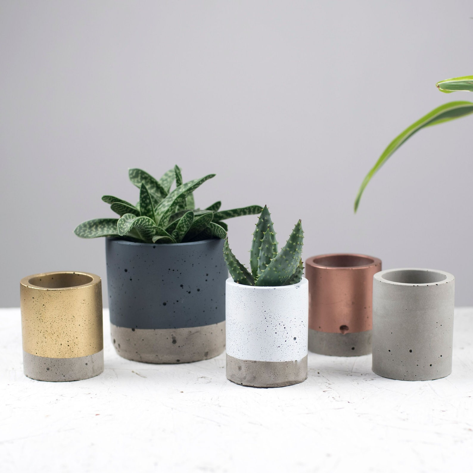 Color Blocked Mini Planters in Gold, Rose Gold, White, Grey