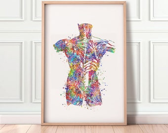 Muscle Anatomy Art Etsy