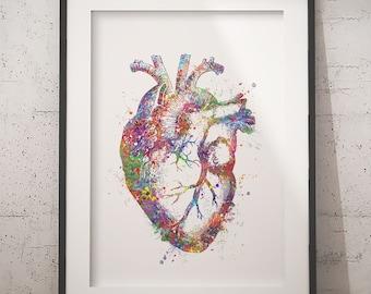 Artistic Heart Anatomy Drawing