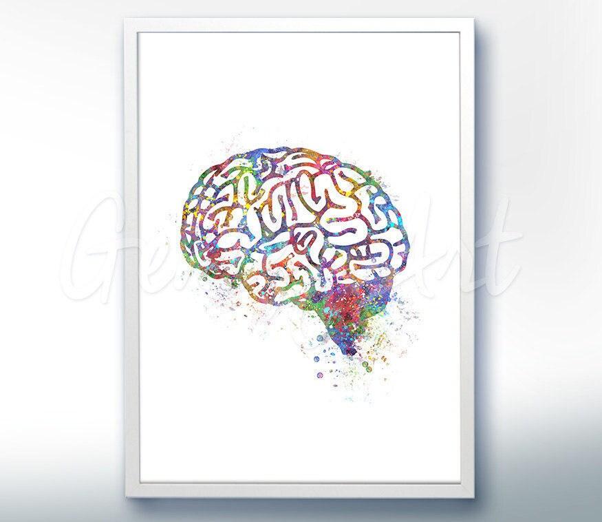 Aquarell Kunstdruck des Gehirns Gehirn-Anatomie Aquarell | Etsy