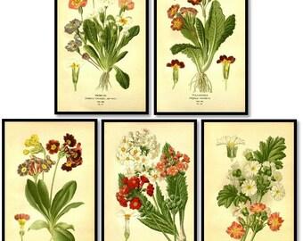 Primrose Flowers Plants Antique Botanical Illustration Plates Set of 5 Art Prints Pale Yellow Background