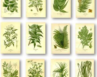 Green Leaves Antique Botanical Illustration Plates Set of 12 Art Prints Pale Yellow Background