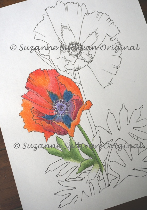 Poppy Flower Coloring Page Coloring Page Adult Coloring Etsy
