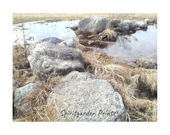 Digital download - Rock Pond Spring 2017 Print