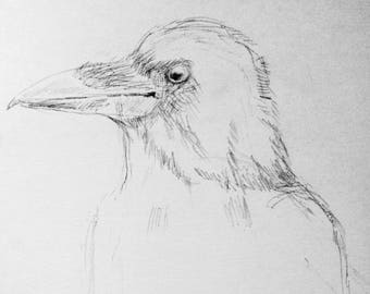 Art Print Of A Pencil Drawing Crow Black And White Wall Bird