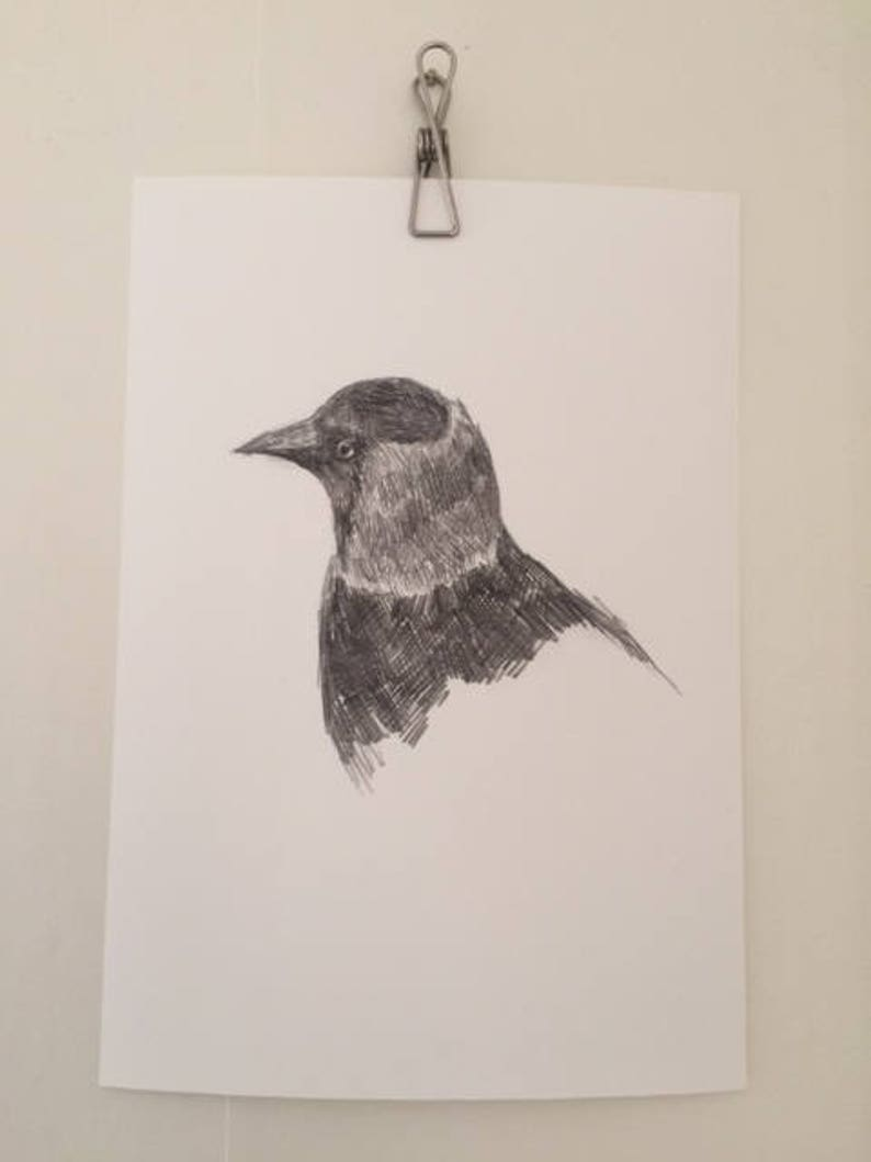 Art print of pencil drawing of a jackdaw kaja wall art bird print garden birds illustration grays grayscale