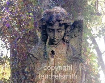 Photography,  wall art, angel, glossy print, digital photograph