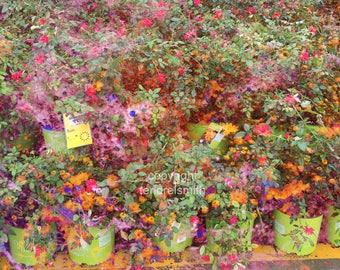 Photography, wall art, flowers, photograph (glossy print)