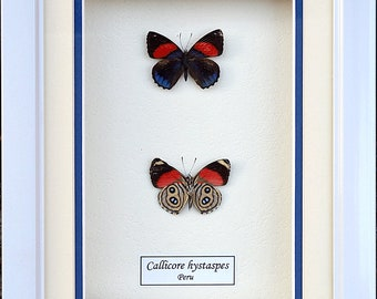 Creative Frame Insects