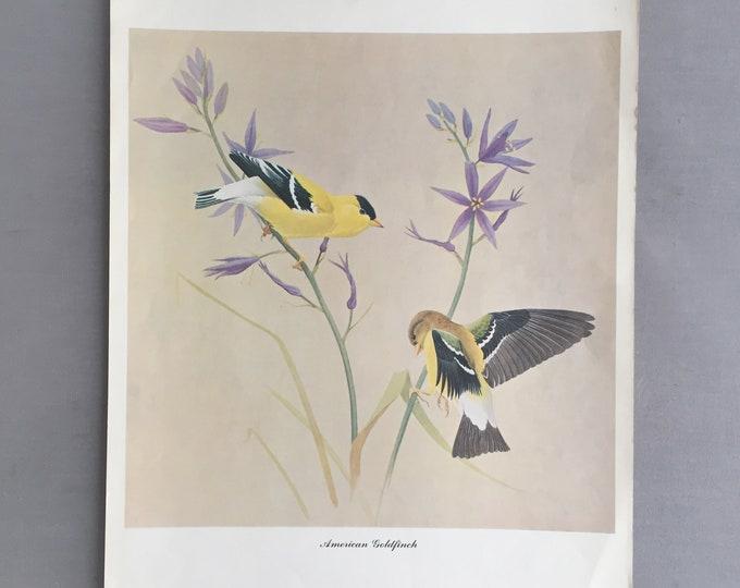 1950s bird print