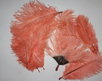 "12-15 CM 10 PACK IVORY  5-6/"" DRABS OSTRICH FEATHERS  FIRST A GRADE"