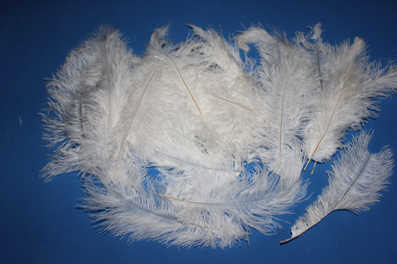 One royal blue ostrich blondene feather first grade 350-400MM 1