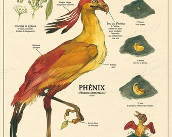 The Phoenix print - Deyrolle curiosity cabinet poster by the artist Camille Renversade