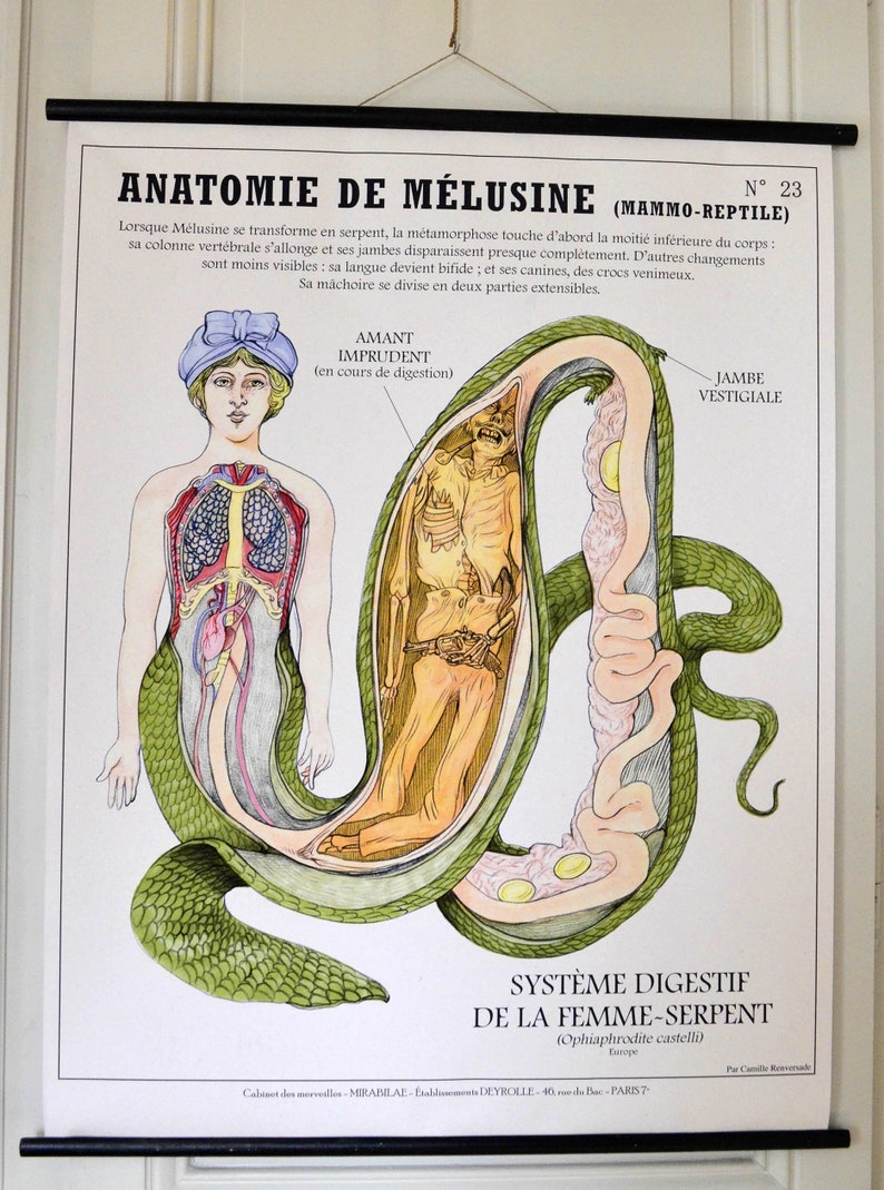 Very Large Planche Anatomy of Melusine 80X100 cm image 0