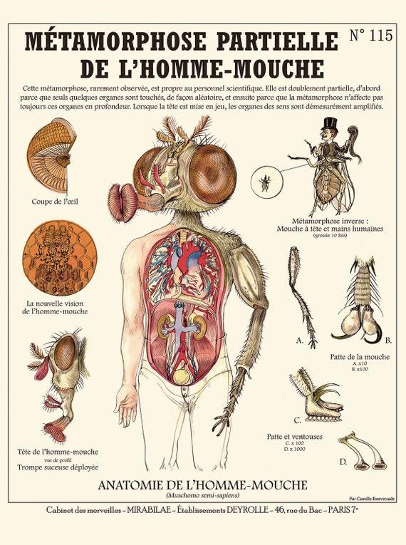 commander en ligne extrêmement unique comment acheter Métamorphose de l'homme-Mouche / The Fly print - Affiche cabinet de  curiosités Deyrolle by the artist Camille Renversade
