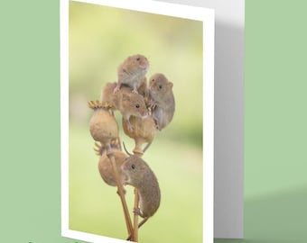 harvest mouse card - mouse card - harvest mice - mouse poppies - blank card - greetings card - nature card - card for animal lovers