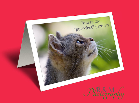 Valentines Card Love You Card Valentine Card Cat Lover Etsy