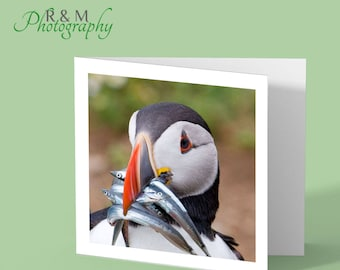 puffin greeting card - puffin close up - puffin photo - puffin any occasion card - bird card - blank bird card - card for bird lovers
