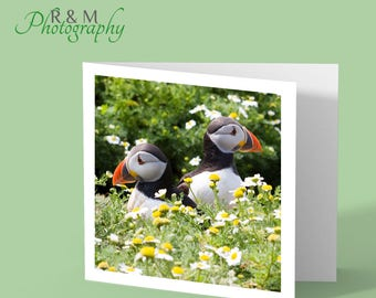 puffin greeting card - puffin close up - puffin photo - puffins - any occasion card - bird card - blank bird card - card for bird lovers