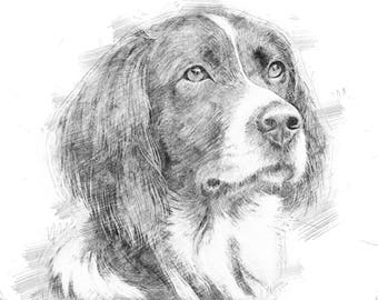 Pet drawings nz