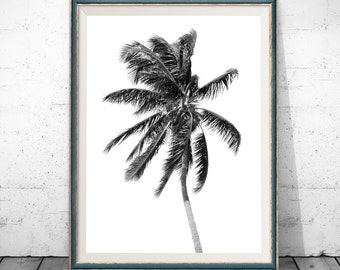 black and white palm, palm print, black and white palm tree, palm tree photo, tropical art black and white, tropical print, palm tree photo