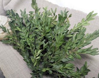 Boxwood plant, branches greenery twigs flower rustic floral arrangement _ Set of 10 branches