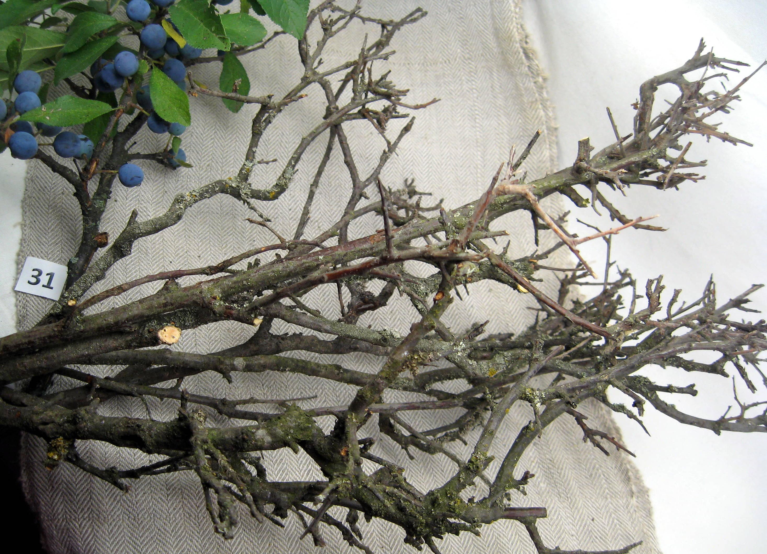 Branches Centerpiece Blackthorn Tree Branches Art Home