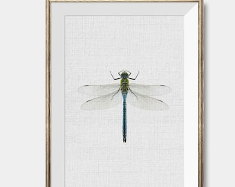 Dragonfly print, dragonfly decor, dragonfly poster, dragonfly printable, dragonfly art, insect print,insect wall art,modern printable art