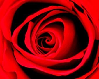RED ROSE FLOWER, Art Print, Flower Print, Photography Print, Artist Signed Print