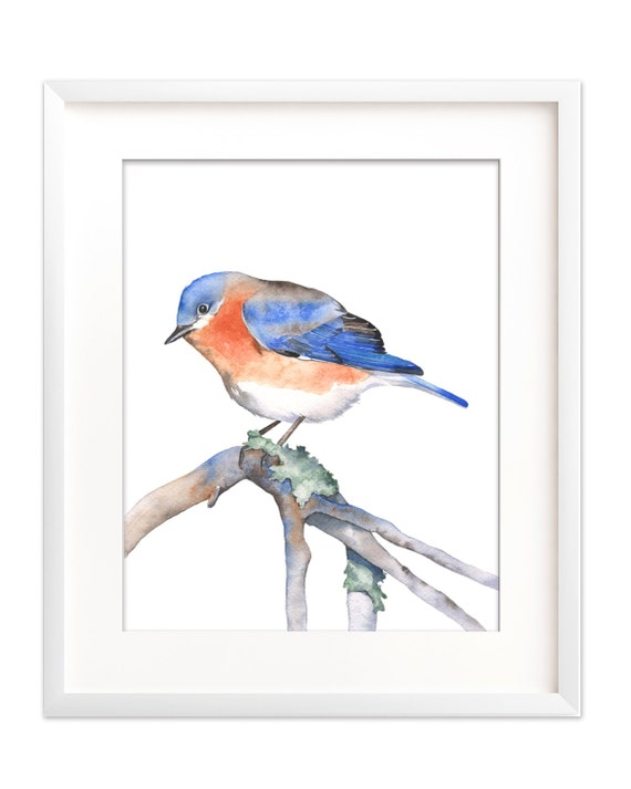 Bluebird watercolor bluebird print bluebird digital print | Etsy