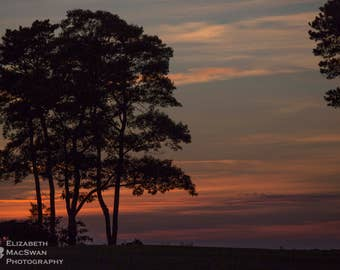 Chatham Sunset Through Trees II (unframed matted print)