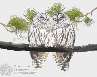 Barred Owls In Love Composite (unframed matted print)
