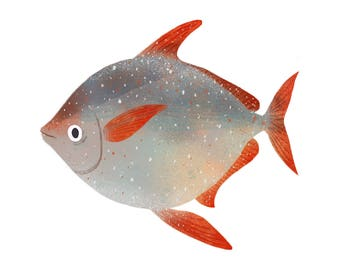 Art Print Illustration - Opah Ocean Moonfish