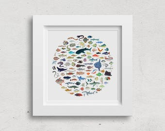LIMITED EDITION Wall Art Print - 100 Fish Illustration