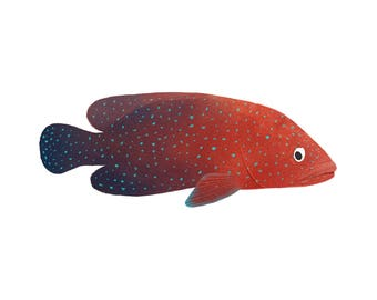Art Print Illustration - Red Miniatus Grouper Fish
