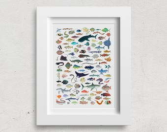 Wall Art Poster - 100 Fish Illustration